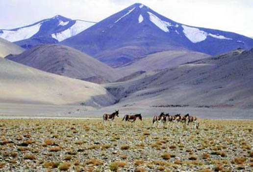 ladakh hill station
