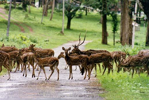 Deer of Nagarhole National Park