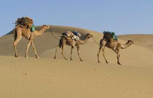 Rajasthan - the Desert State of India